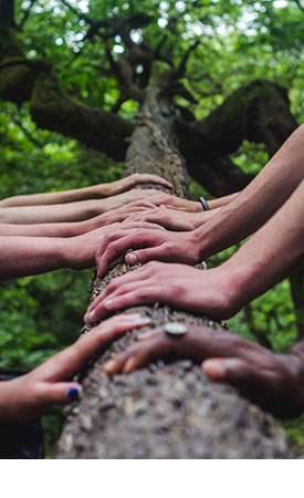 Photo of hands on a log